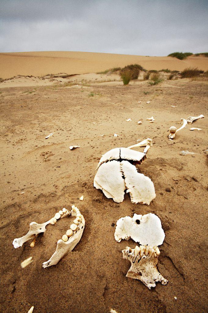 human skull in desert sand, Namibia